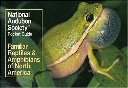 Image for NATIONAL AUDUBON SOCIETY POCKET GUIDE TO FAMILIAR REPTILES AND AMPHIBIANS ( AUDUBON POCKET GUIDES)