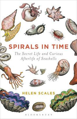 Image for SPIRALS IN TIME: THE SECRET LIFE AND CURIOUS AFTERLIFE OF SEASHELLS